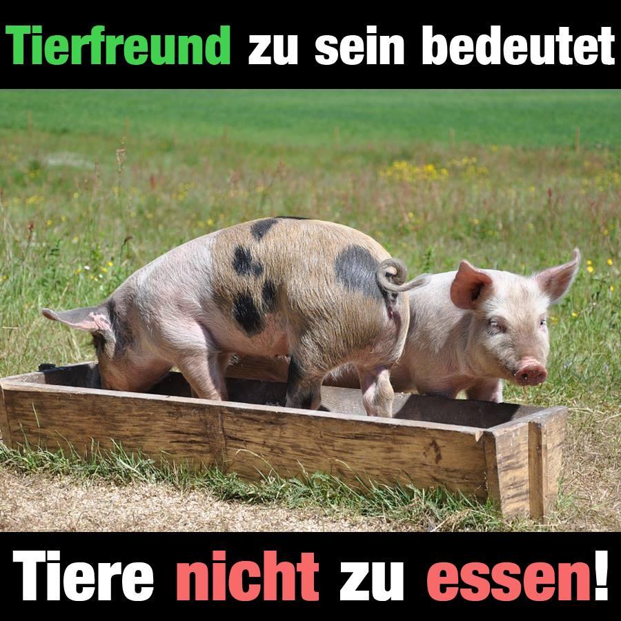 Tierfreund zu sein bedeutet Tiere nicht zu essen